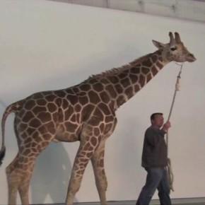 Dzikie zwierzęta fotografowane w studiu przez Brada Wilsona