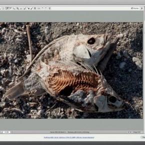 Darmowe webinaria z NIK Silver Efex Pro 2 i HDR Efex Pro