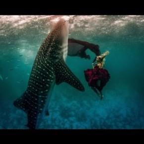 Podwodne zdjęcia z modelkami wśród Rekinów Wielorybich